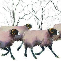 Rogers_Sheep_a.tif